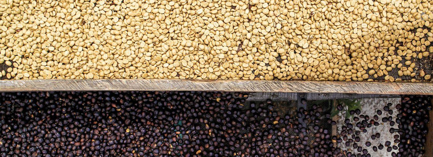 Typy zpracování kávy a jejich vliv na chuť