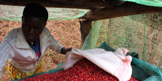 Burundi – Letos bez Mikuby