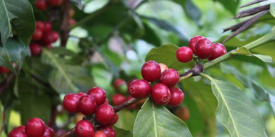 Výběrová káva z pohledu producenta